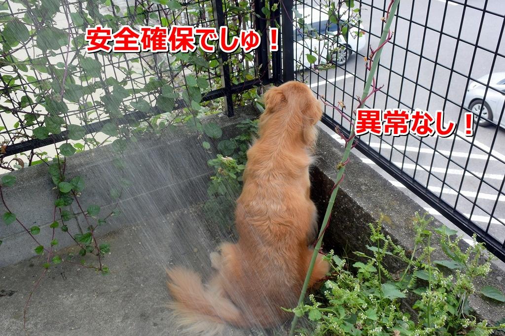 DSC_7364アオちゃんの安全確保 じ~・・