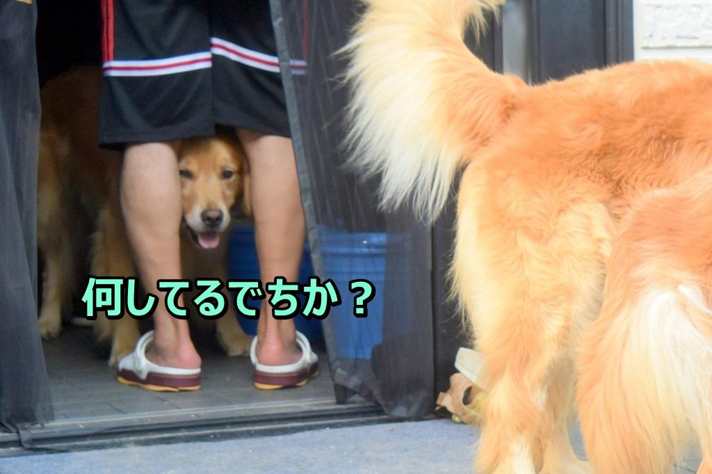 DSC_7292何してんの~?