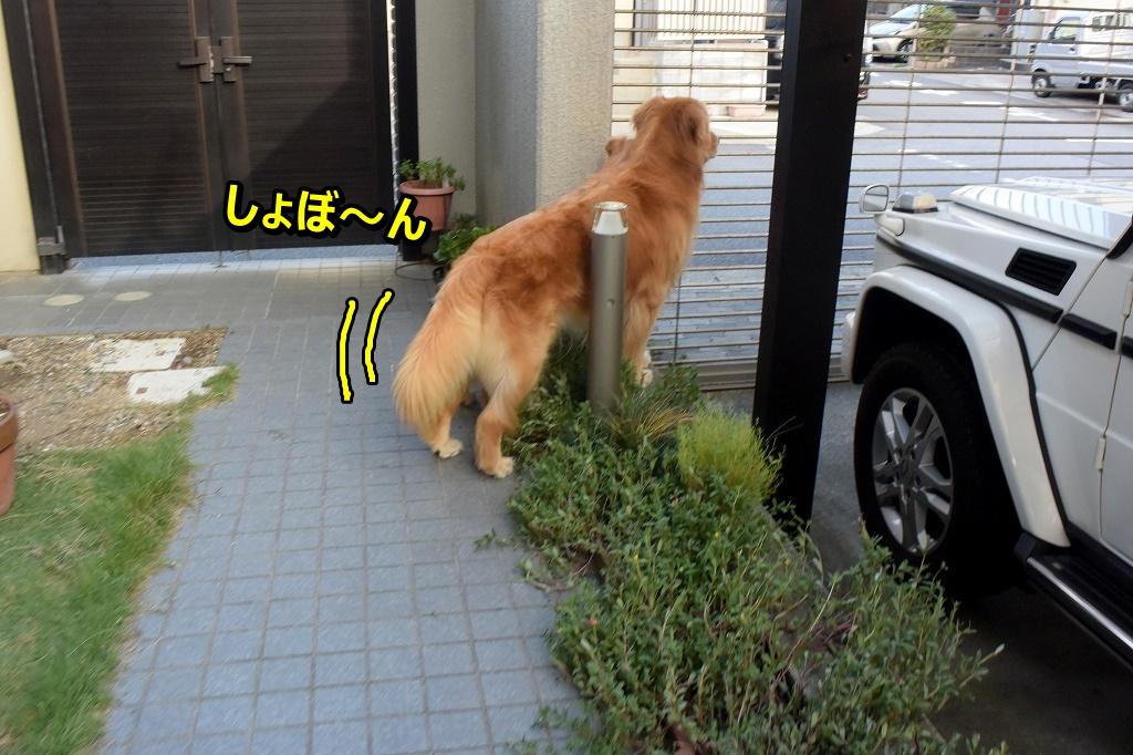 DSC_7329しょぼん