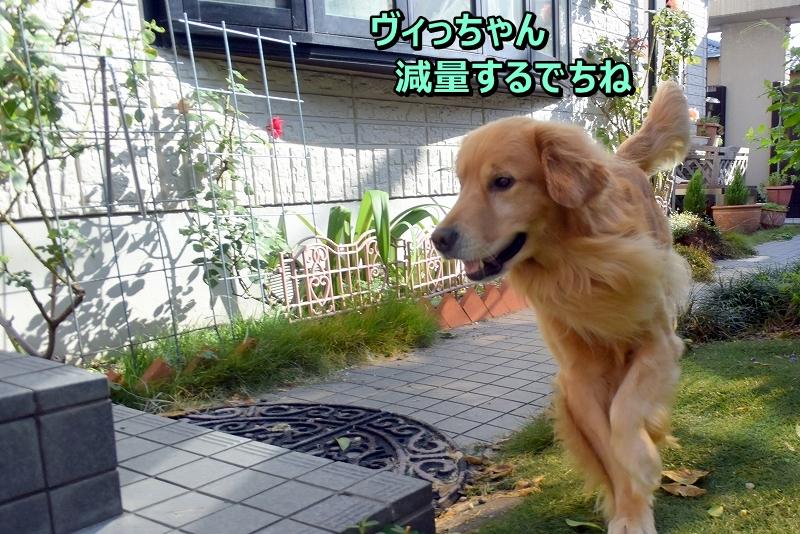 DSC_7478大変ら~