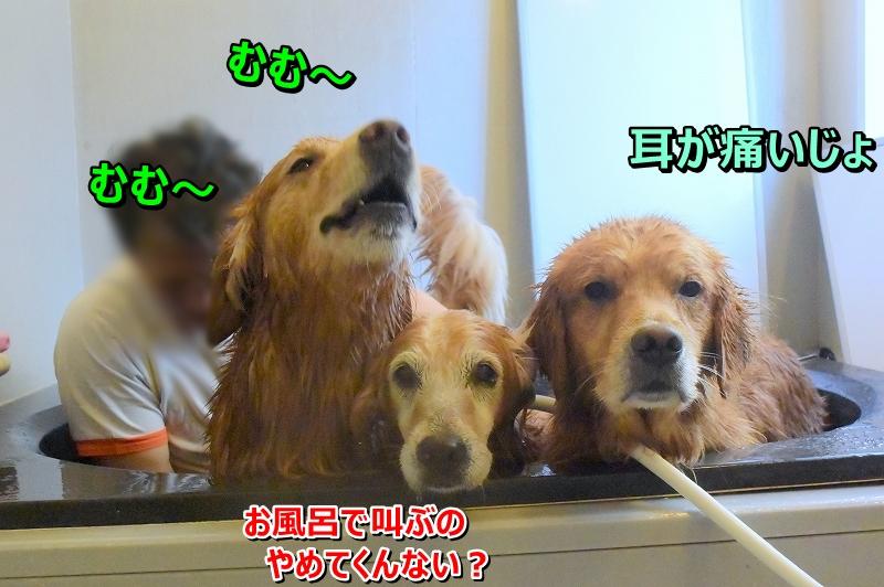 DSC_7715むむ~むむ~