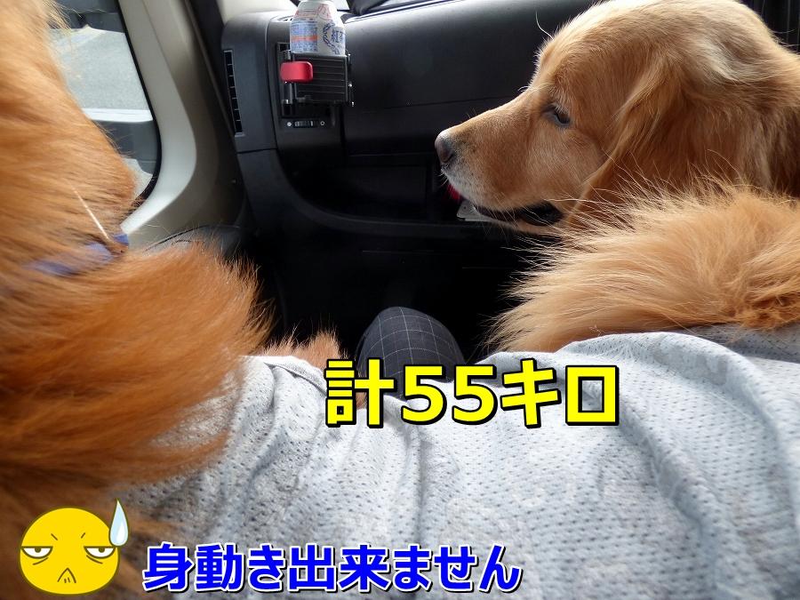 P1040585おもい~