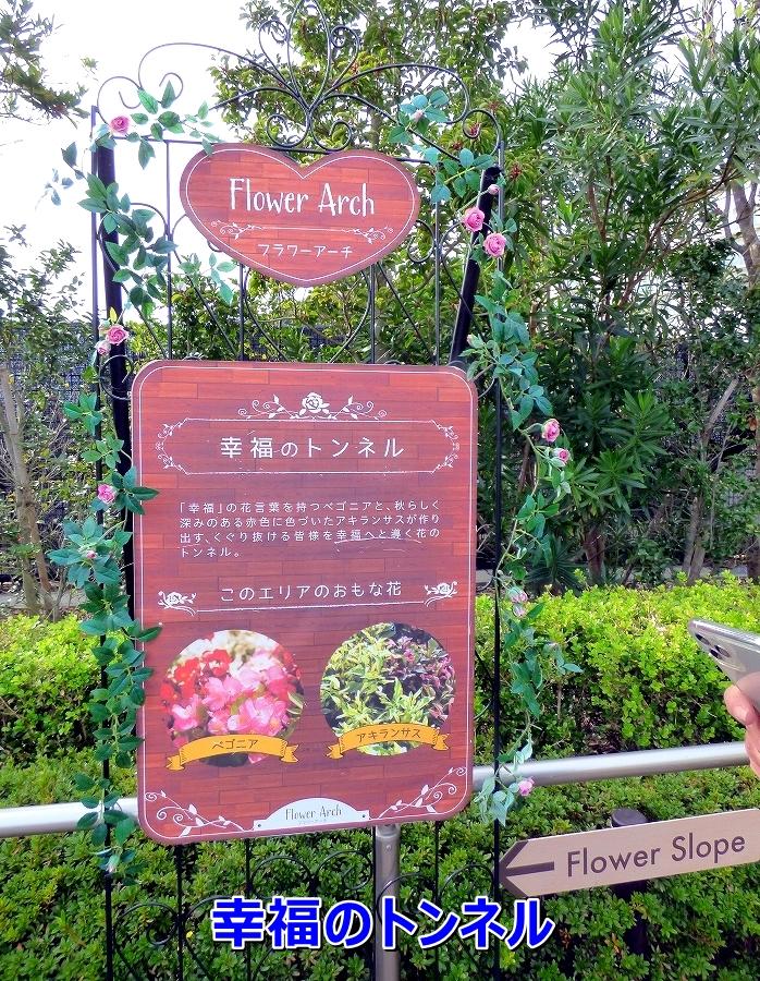 P1040775幸福の花言葉の意味の花のトンネル