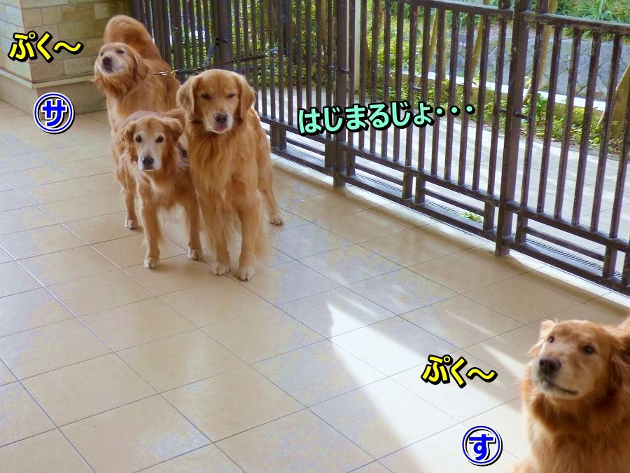 P1050032ぷく~