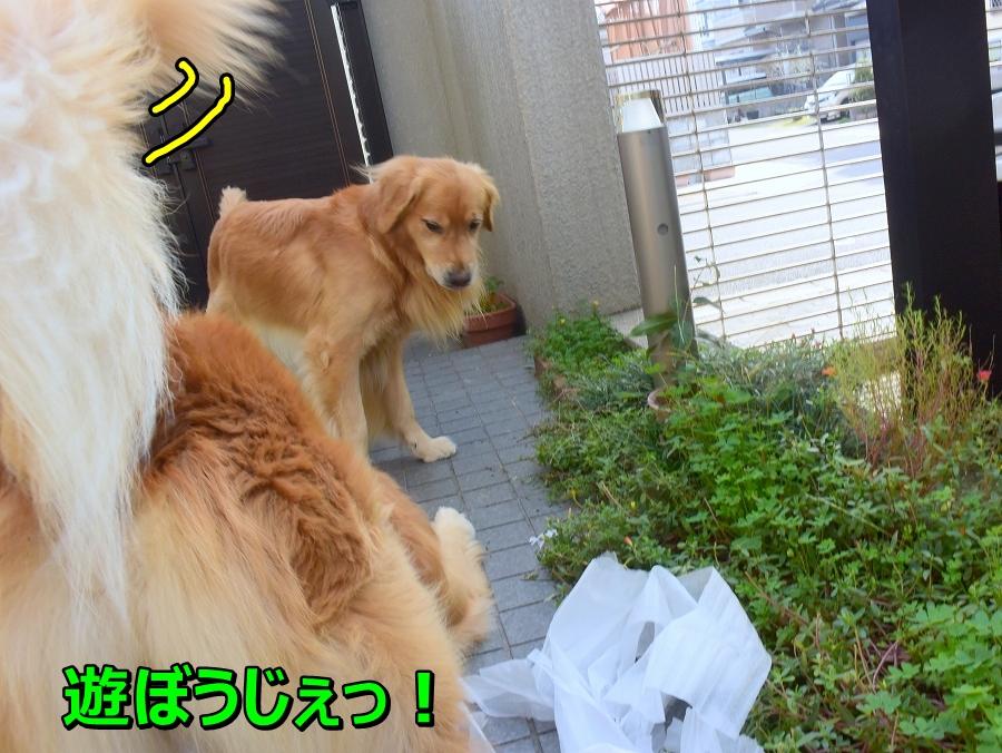 DSC_7588遊ぼうじぇ
