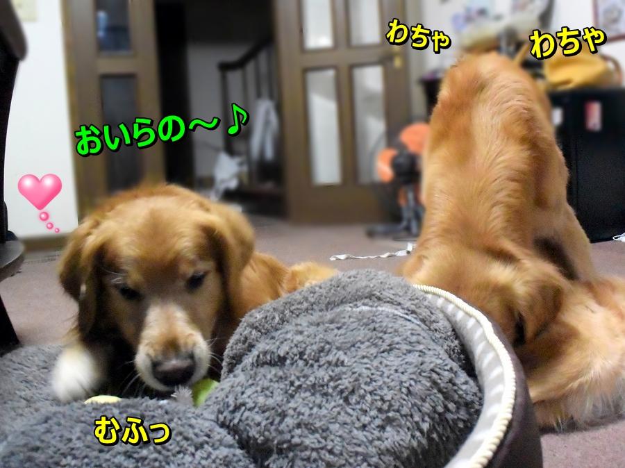 DSC_8251おいらの|~