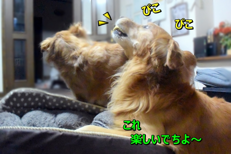 DSC_8260むむ~