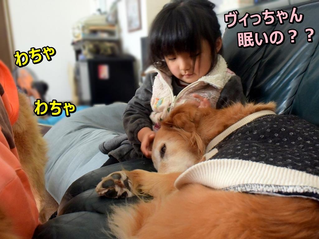 DSC_8393ヴィっちゃん眠いの?