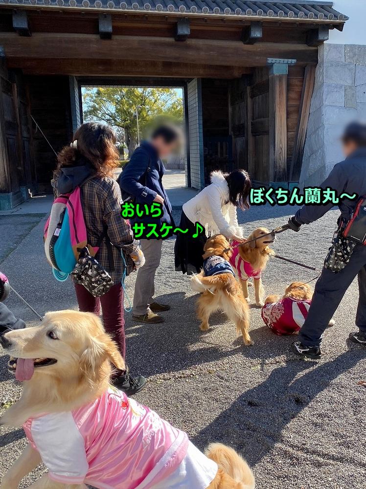 2019-01-19岡崎城_ラグーナ海岸_200128_0096
