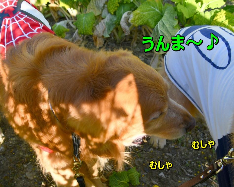 DSC_3448むしゃむしゃ