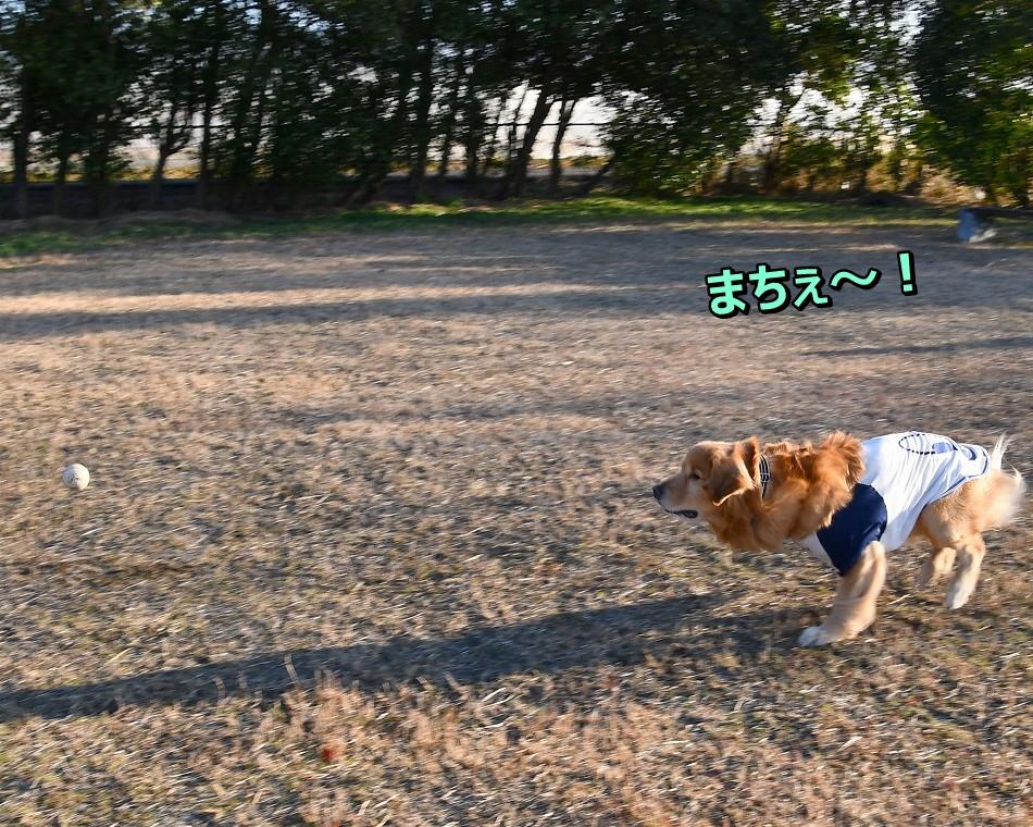 DSC_3517まて~