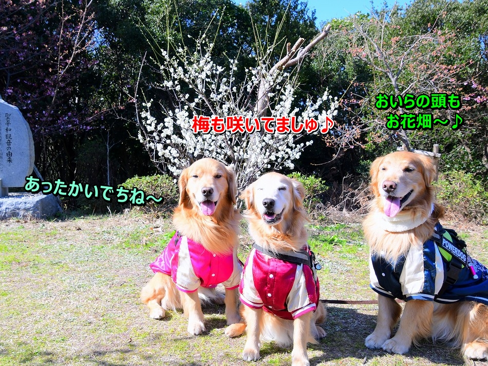 DSC_3871梅も咲いてる