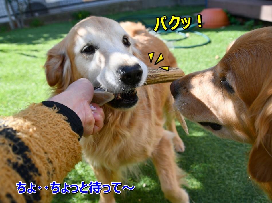 DSC_4278ぱくっ!え?