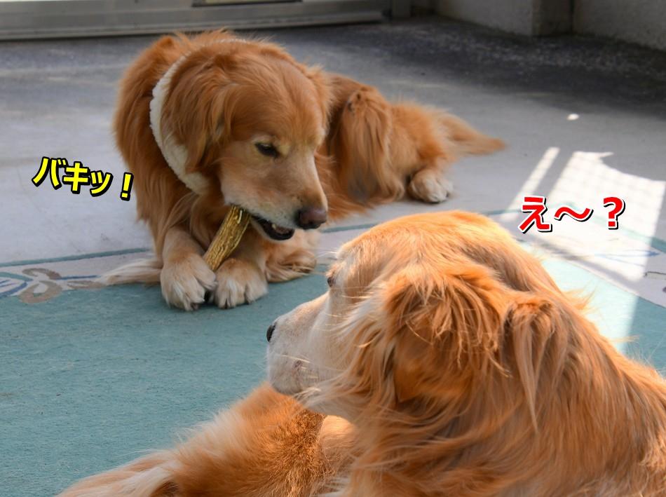 DSC_4300じ~・・・