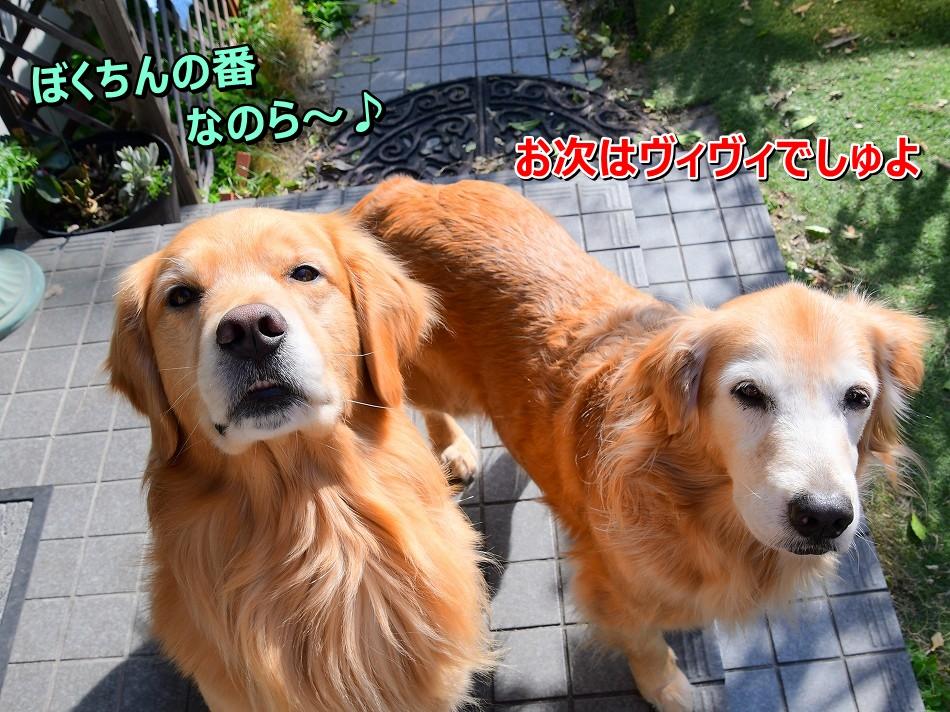 DSC_4311ぼくちんの番ら~