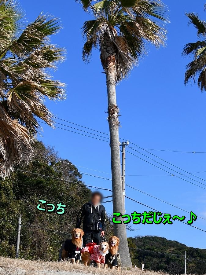 DSC_2694_20200104211129220.jpg