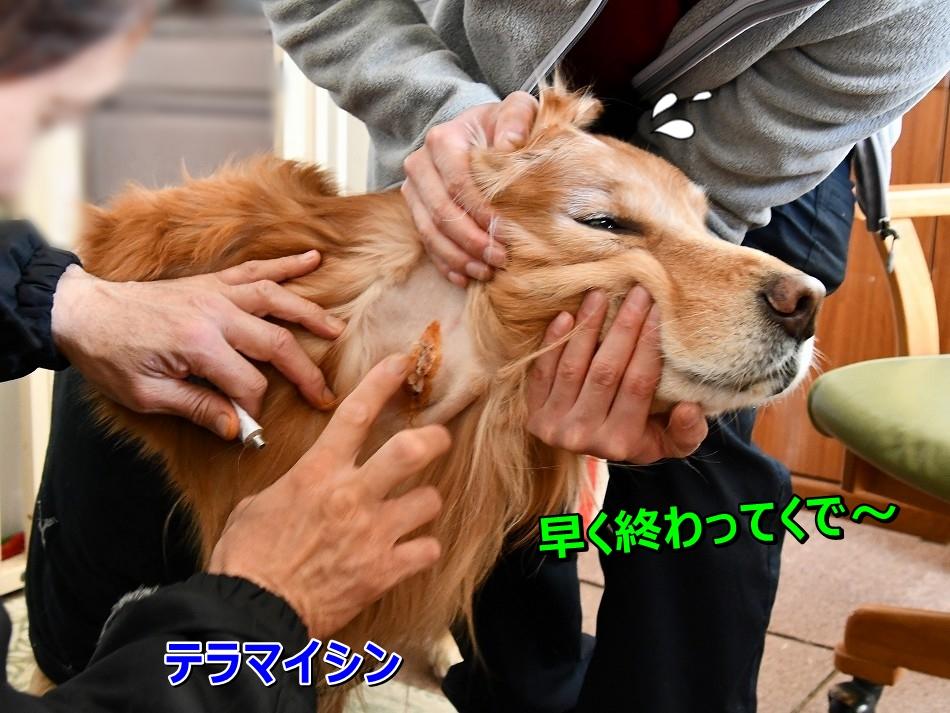 DSC_3825_20200219202345ae0.jpg
