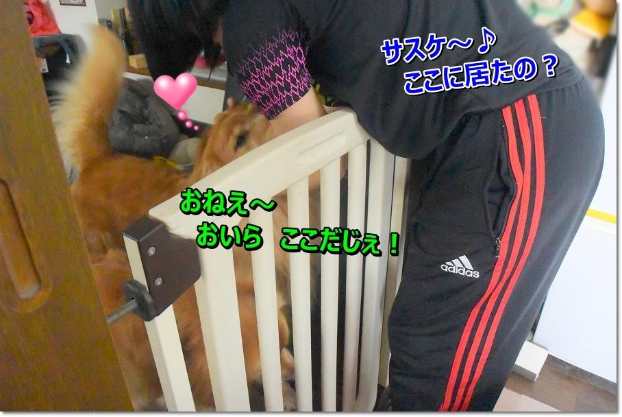DSC_7217_20191029195513696.jpg