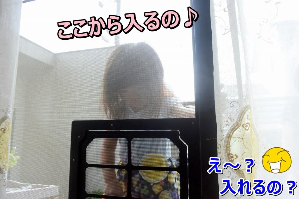 DSC_7223_2019110415144927d.jpg