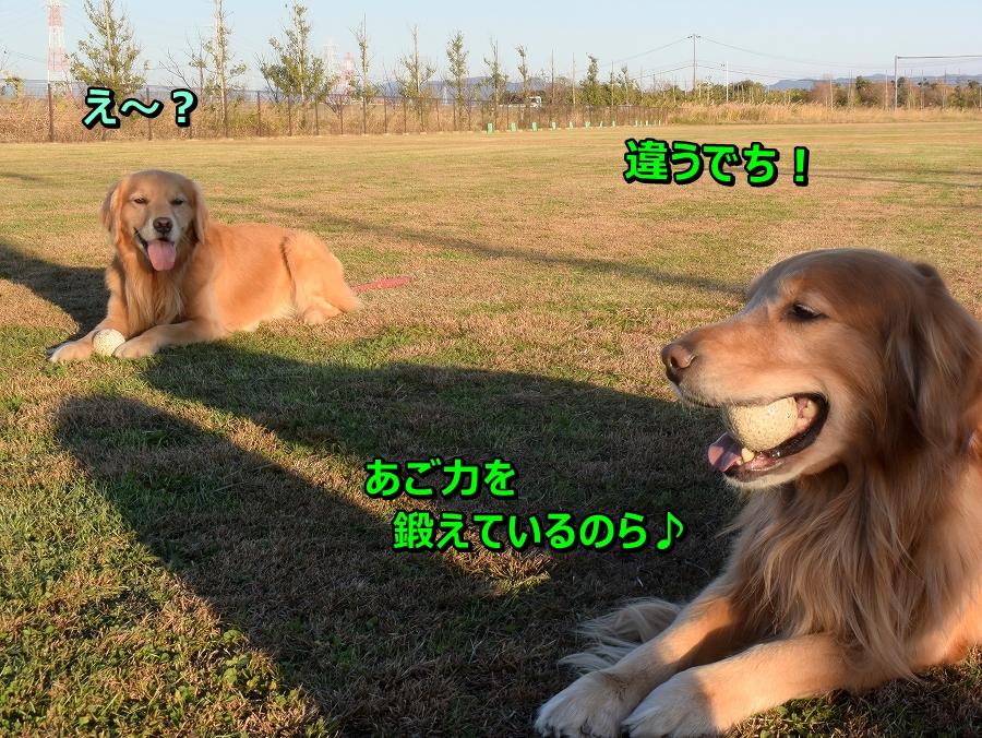 DSC_8199_20200201174228469.jpg