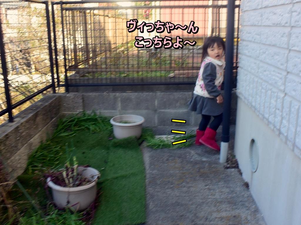 DSC_8458_202001112245237e3.jpg