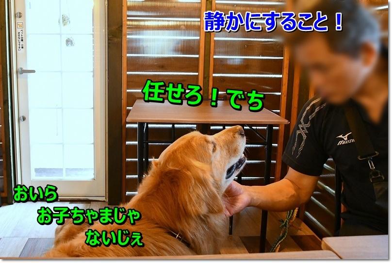 DSC_9627_20191010201217a43.jpg