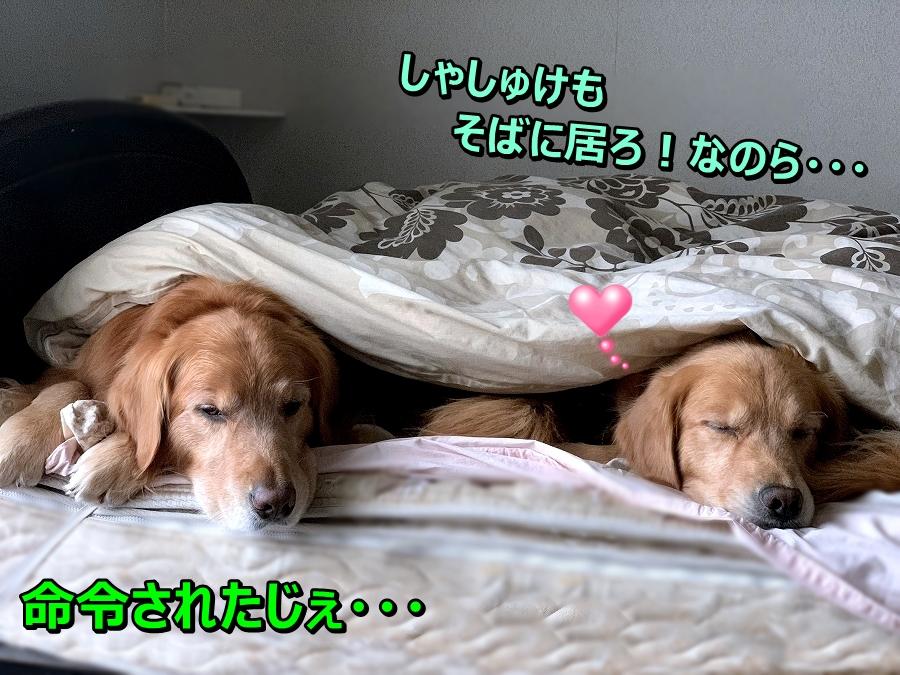 S__5005347.jpg
