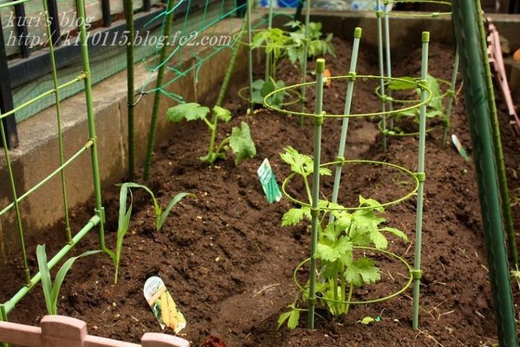 2020家庭菜園開始 (1)