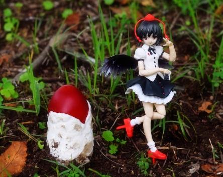 タマゴタケ幼菌