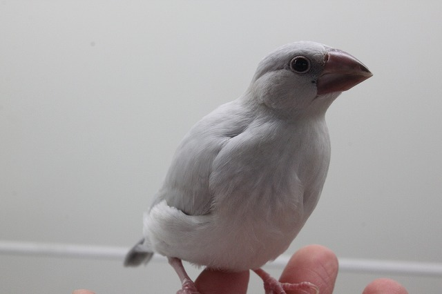 200405 (2)