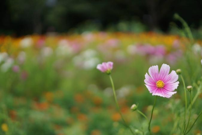 DSC02397里山公園