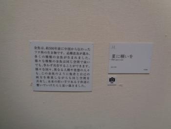 DSC02787.jpg