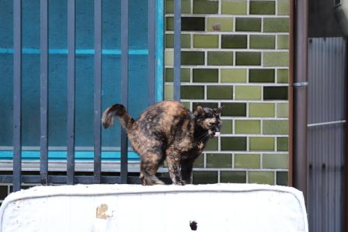 布団にサビ猫2
