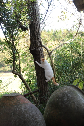 モンちゃん木登り