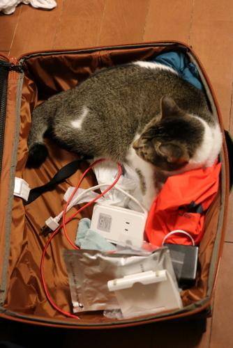 スーツケースナッツ2