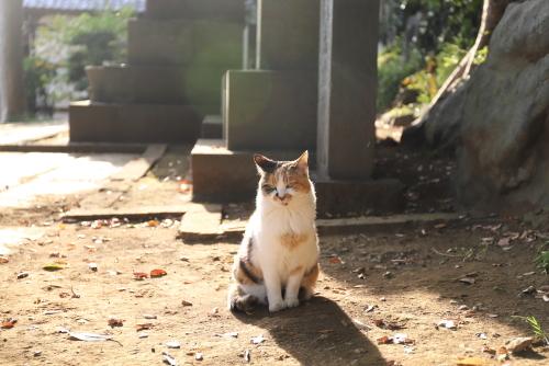 お寺の三毛ちゃんキラキラ