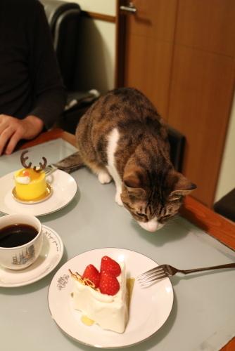 レイ坊のケーキ