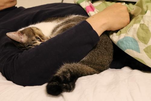 ナッツ腕枕