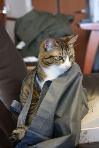 袋を纏う2