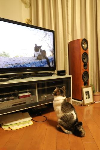 テレビ鑑賞1