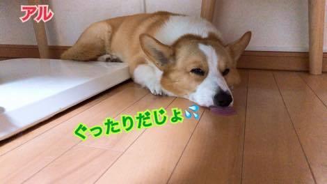 th_IMG_0879.jpg