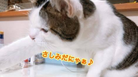 th_IMG_0913.jpg