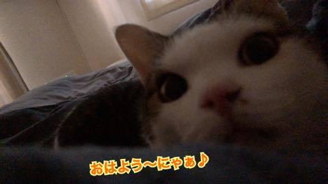 th_IMG_1162.jpg