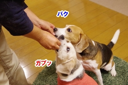 焼き芋 5
