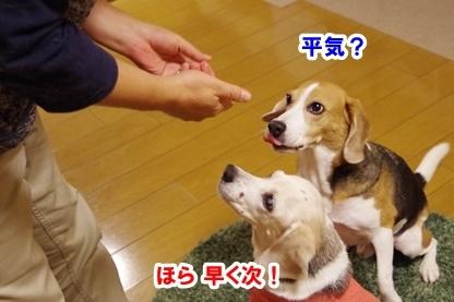 焼き芋 6