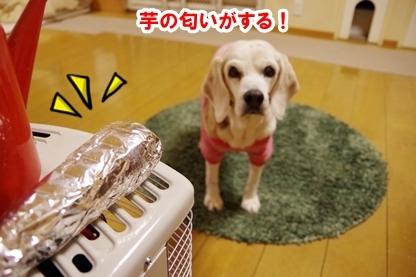 焼き芋 1
