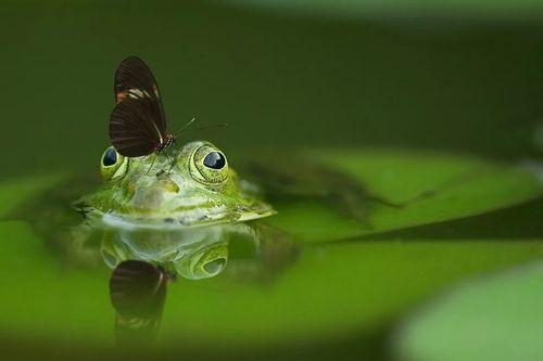 frog-540812_960_720.jpg