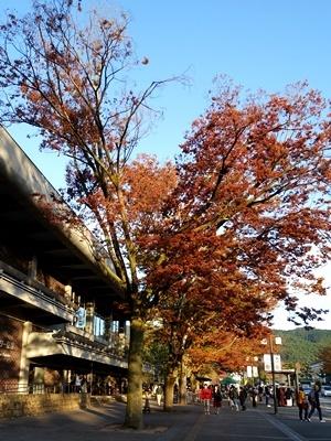 ロームシアター京都前紅葉間近1911