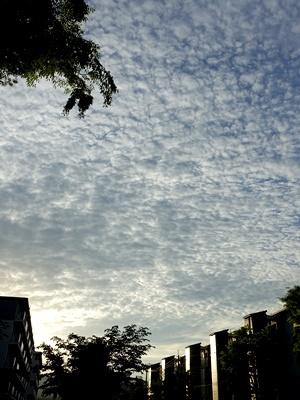 うろこ雲2005