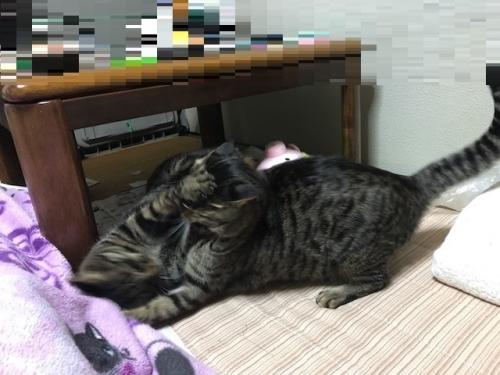 ノンちゃんなーくん小競り合い (2)